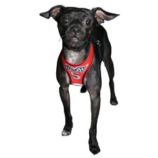 Racing Team Mesh Dog Harness Vest