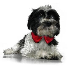 Formal Dog Bow Tie and Collar