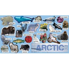 Arctic Plants & Animals Mini Bb Set