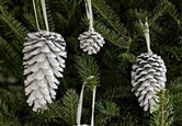 Holiday Tree Trends